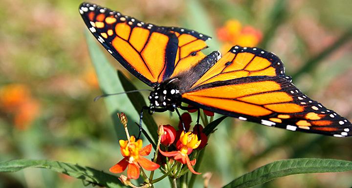 Butterfly Trail Members List