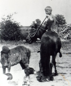 PJC riding horse LADY colt LADY LEE dog SAM 1934 SHRUNK