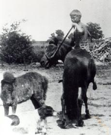 PJC riding horse LADY colt LADY LEE dog SAM 1934 SHRUNK